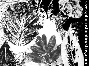 Leaf Print Brushes