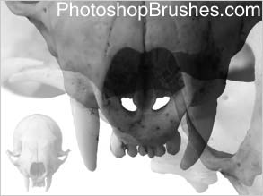Weasel Skull Photoshop Brushes